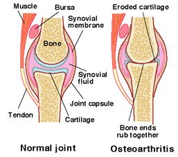 knee_joint ok