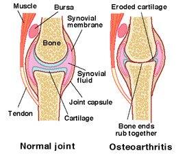 knee_joint ok